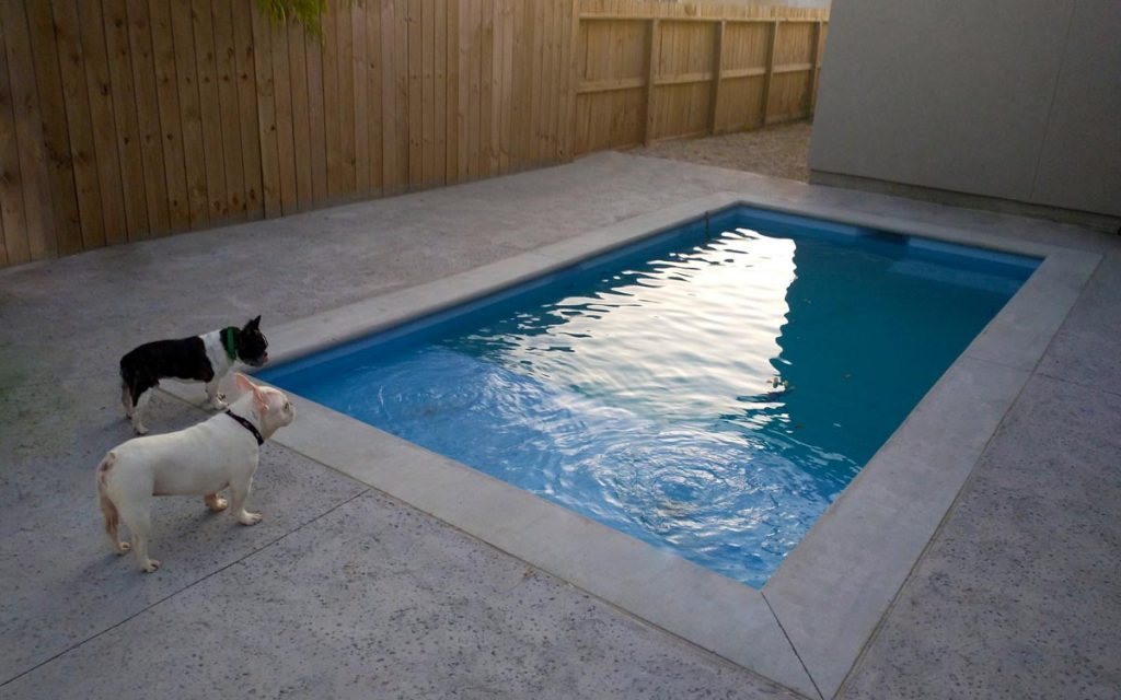 Dogs waiting to swim in ICF swimming pool built by Pools by DC Design